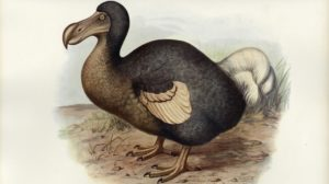 L'os du dodo